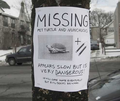 Beware of the Turtle