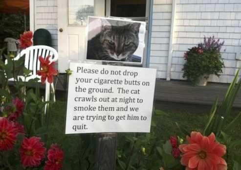 Cat Addiction