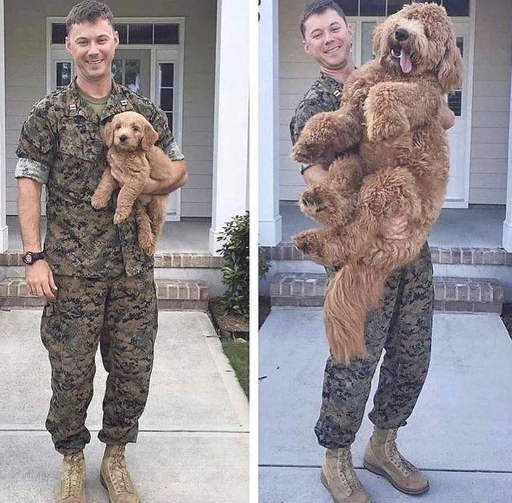 Military Mutt