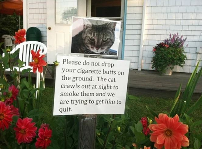 Stop Smoking for the Kitty's Sake