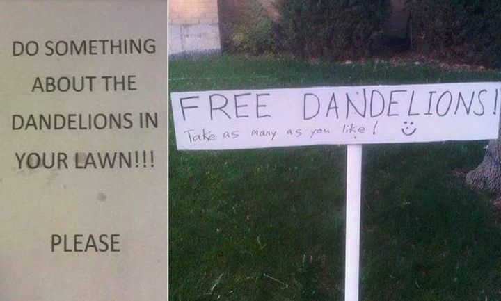 How Dare You, Dandelions!